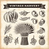 A set of fully editable vintage fruits and vegetables in woodcut style. EPS10 vector illustration. Includes high resolution JPG.