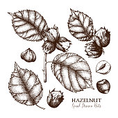 Vintage hazelnut collection