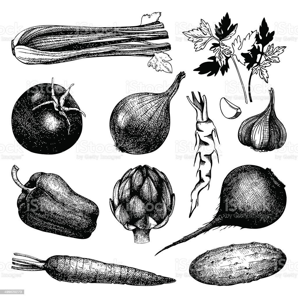 Vintage healthy food illustration isolated on white vector art illustration