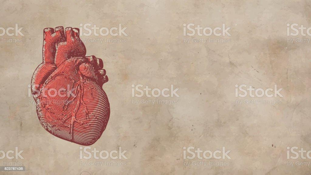 Vintage human heart illustration on old paper BG vector art illustration