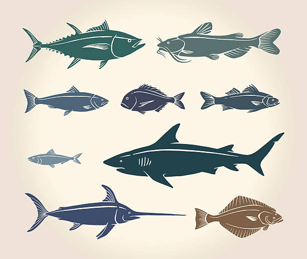Vintage illustration of fish Vintage illustration of fish and seafood over white background animal fin stock illustrations