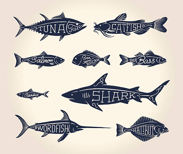 ilustraciones, imágenes clip art, dibujos animados e iconos de stock de ilustración vintage de pescado con nombres - atún pescado