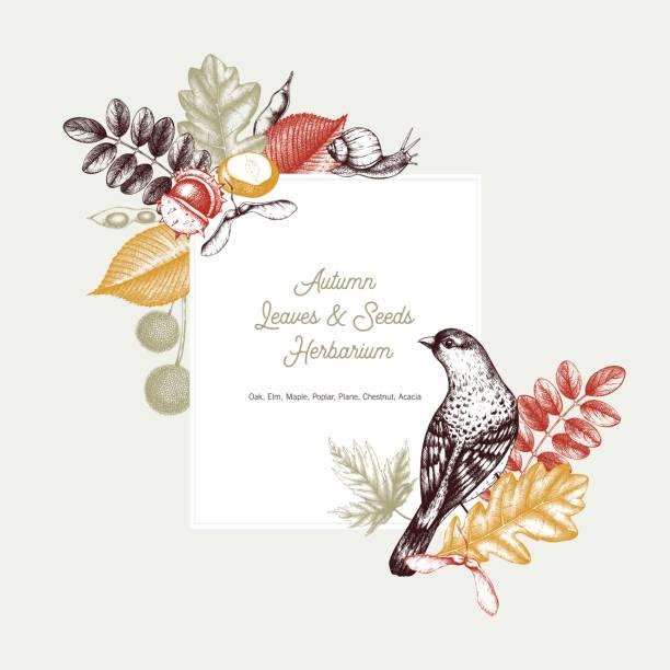 stockillustraties, clipart, cartoons en iconen met vintage kaart van bladeren en zaden - vogel herfst