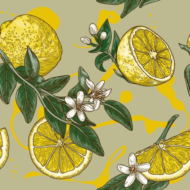 illustrazioni stock, clip art, cartoni animati e icone di tendenza di vintage lemon citrus blossom seamless pattern - illustrazioni di limone
