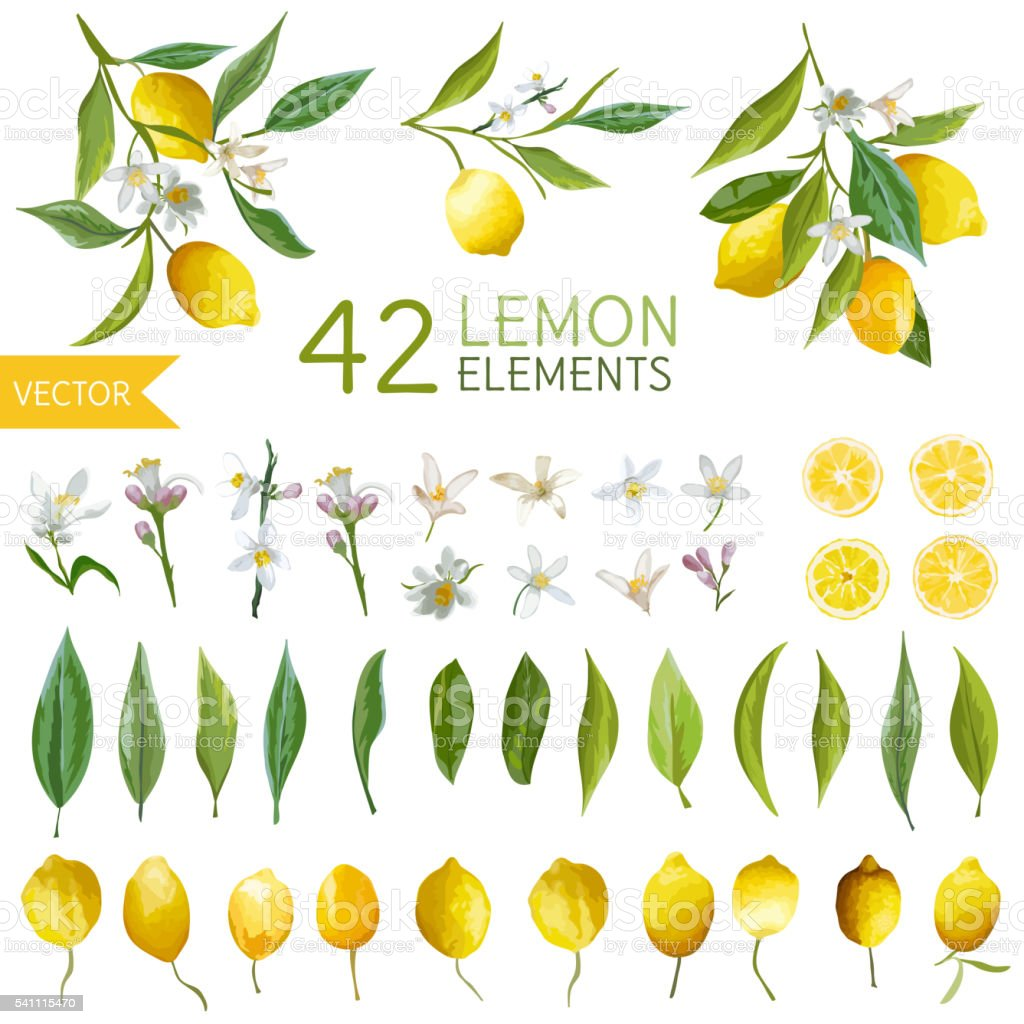 Vintage Lemons, Flowers and Leaves. Lemon Bouquetes. Watercolor Style vector art illustration