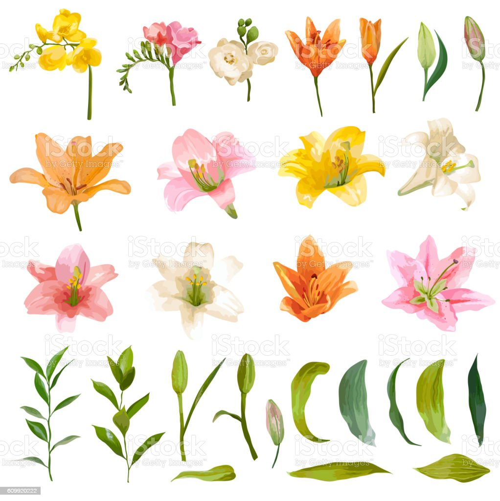 Vintage Lily and Rose Flowers Set - Watercolor Style vector art illustration