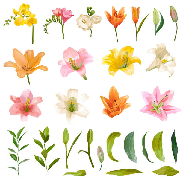Vintage Lily and Rose Flowers Set - Watercolor Style Vintage Lily and Rose Flowers Set - Watercolor Style - in vector lily stock illustrations