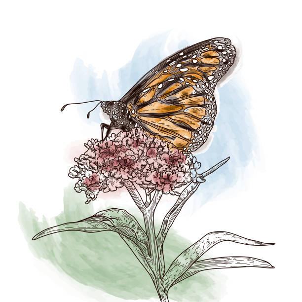 Vintage Line Art Monarch Butterflies on Milkweed Pattern vector art illustration