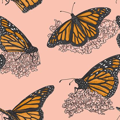 Vintage Line Art Monarch Butterflies on Milkweed Pattern