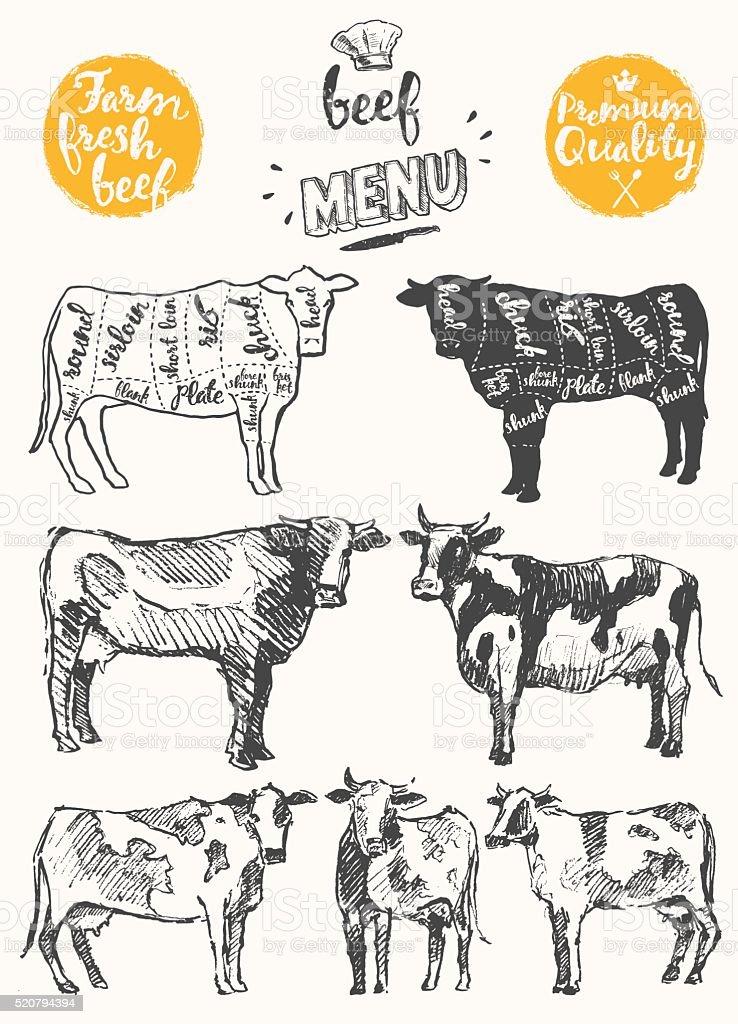 Vintage meat menu scheme beef cuts drawn vector
