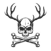 Vintage monochrome skull with deer horns