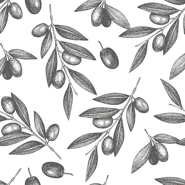 Vintage olive background Vector pattern with ink hand drawn olive tree twigs isolated on white. Vintage olive background olives stock illustrations