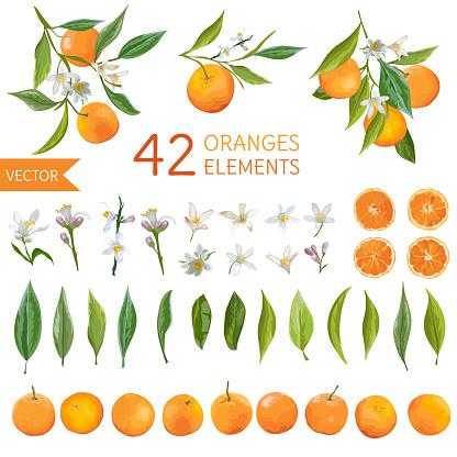 Vintage Oranges, Flowers and Leaves. Lemon Bouquetes. Watercolor Style Oranges. Vector Fruit Background.