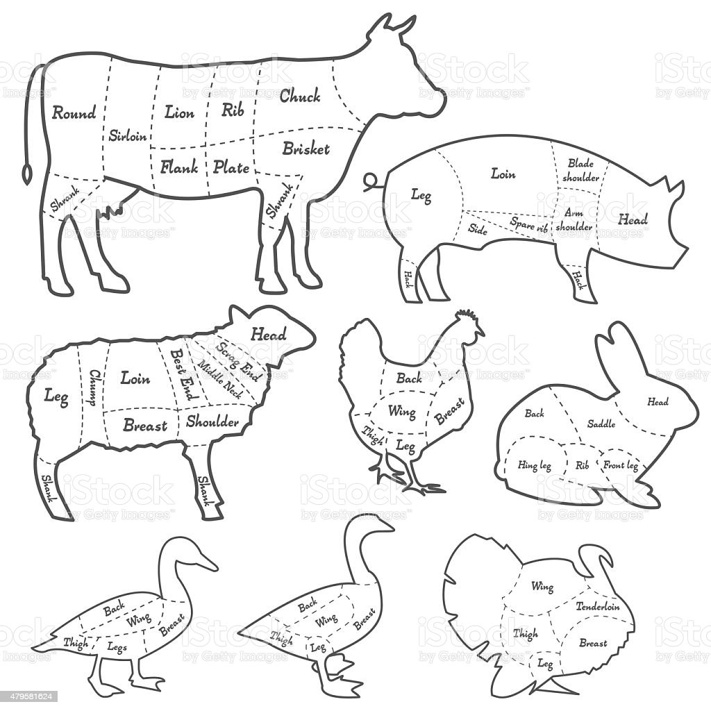 Vintage outline diagram meal cutting of domestic animals stock vintage outline diagram meal cutting of domestic animals royalty free vintage outline diagram meal cutting pooptronica