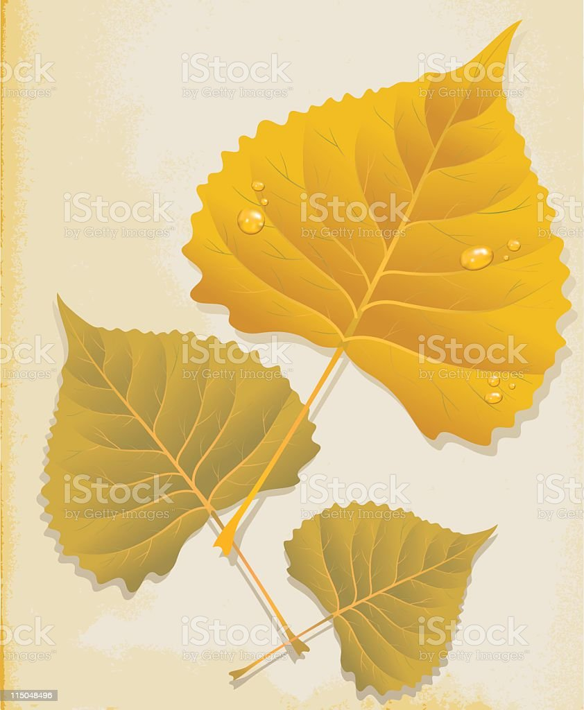Vintage Paper with Fall Poplar Leaves vector art illustration