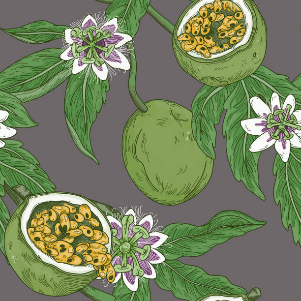 Vintage Passion Fruit Vine Blossom Seamless Pattern vector art illustration