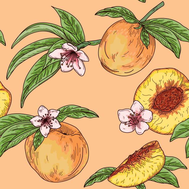 Vintage Peach Fruit Tree Blossom Seamless Pattern vector art illustration