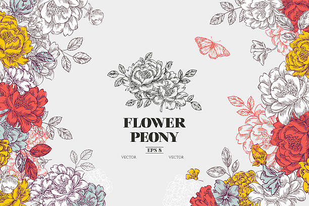 Vintage peony flower background. Flower design template. Vector illustration​​vectorkunst illustratie