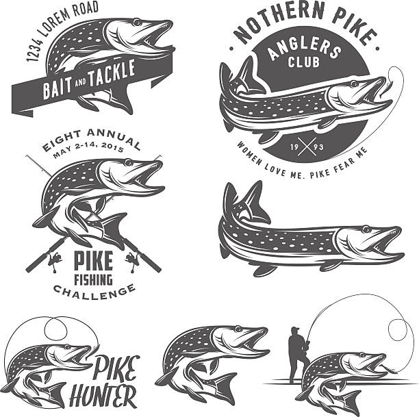 Vintage pike fishing emblems, labels and design elements Vintage pike fishing emblems, labels and design elements. pike fish stock illustrations