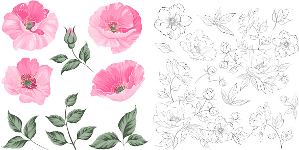 Vintage poppy set. Wedding flowers bundle. Flower collection of watercolor detailed hand drawn poppies. Red poppies collection.