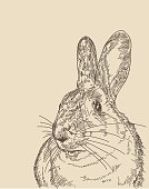 Line artwork of a rabbit on an antique coloured background. Separated to layers, easy to remove