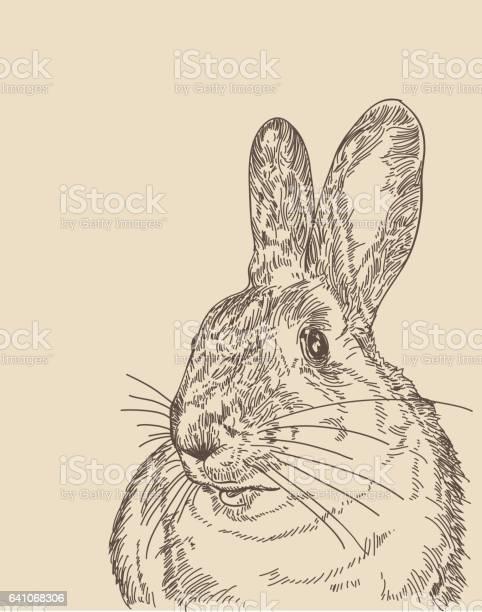 Vintage rabbit vector id641068306?b=1&k=6&m=641068306&s=612x612&h=rbpke 0lgiqy5mcd0sb6omzug gi3iirevlozpqjf0k=