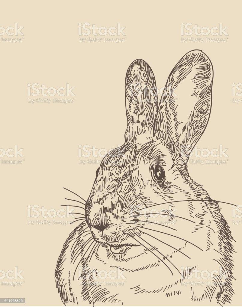 Vintage Rabbit vector art illustration