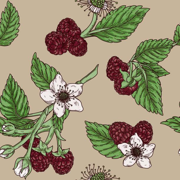 Vintage Raspberry Blossom Seamless Pattern vector art illustration
