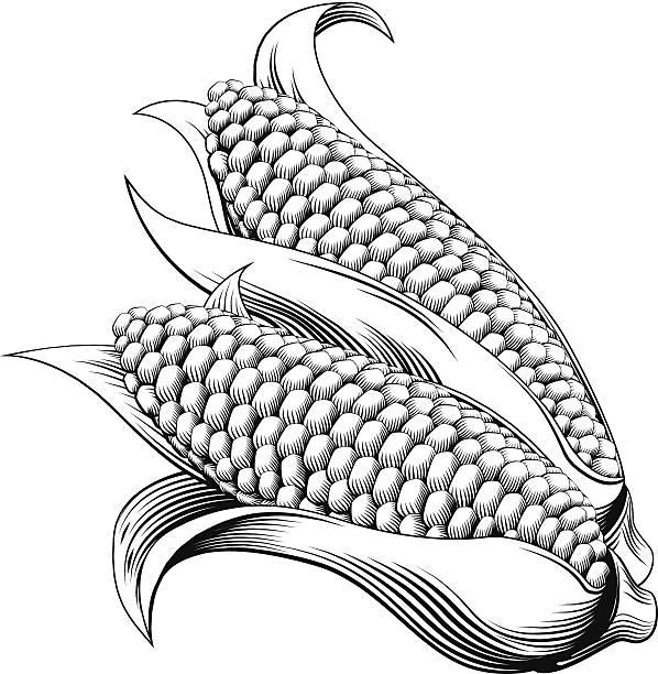 ilustrações de stock, clip art, desenhos animados e ícones de vintage retro de xilogravura milho doce - milho