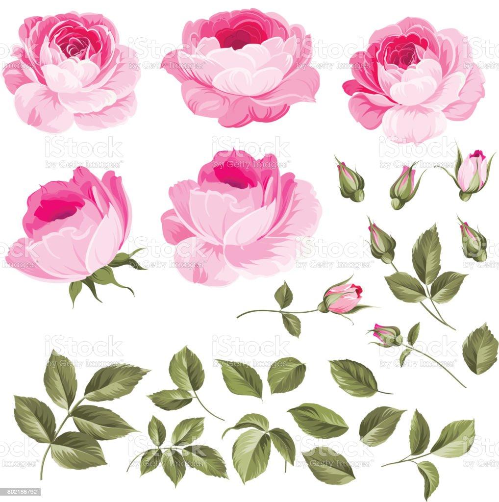 Vintage roses set vector art illustration