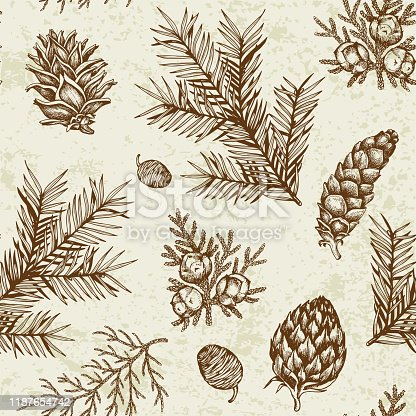 Vintage winter seamless pattern with evergreen plants. Decorative background for Christmas and new year. Hand drawn vector pattern.