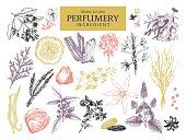 Vintage set of aromatic plants for perfumes and cosmetics.