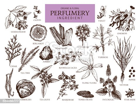 istock Vintage set of aromatic plants for perfumes and cosmetics. 534486222