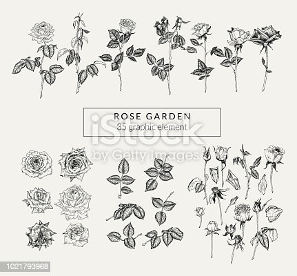Vintage set of hand drawn roses and plant elements. Retro-styled graphics collection.
