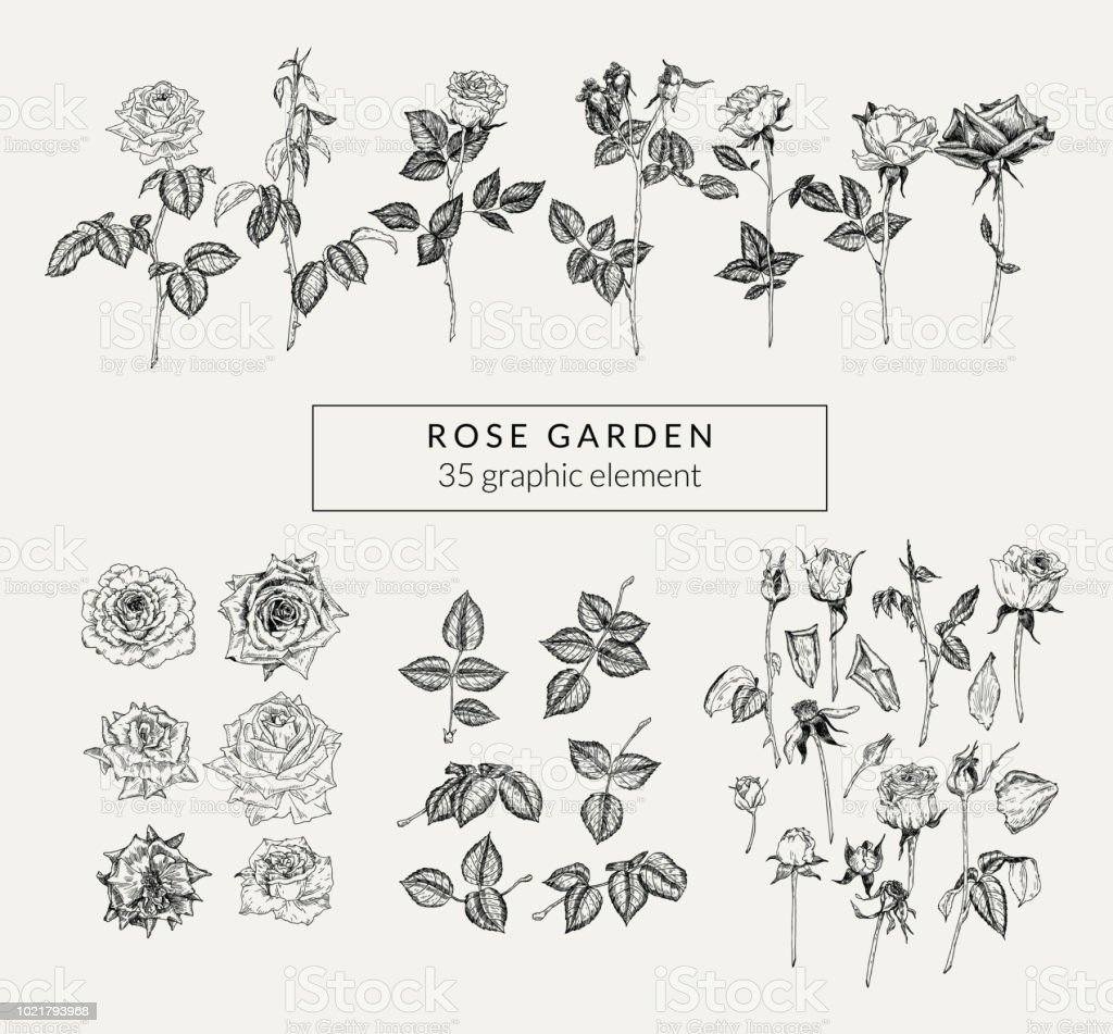 Vintage set of hand drawn roses and plant elements. Retro-styled graphics collection. vector art illustration