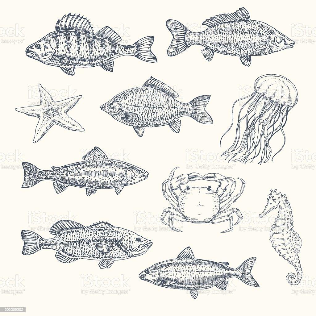 Vintage set of sea creatures. hand drawn illustration, sketch vector art illustration
