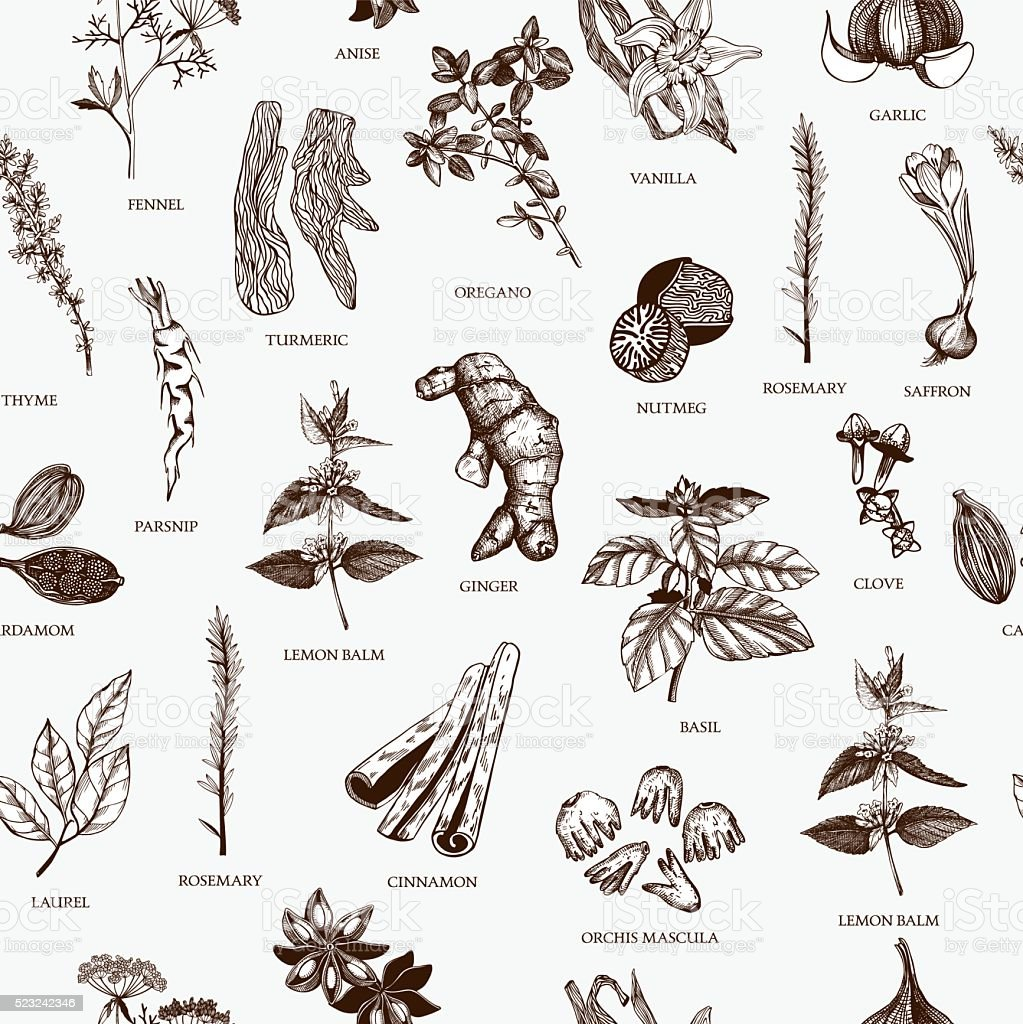 Vintage spice background for your menu or kitchen design vector art illustration