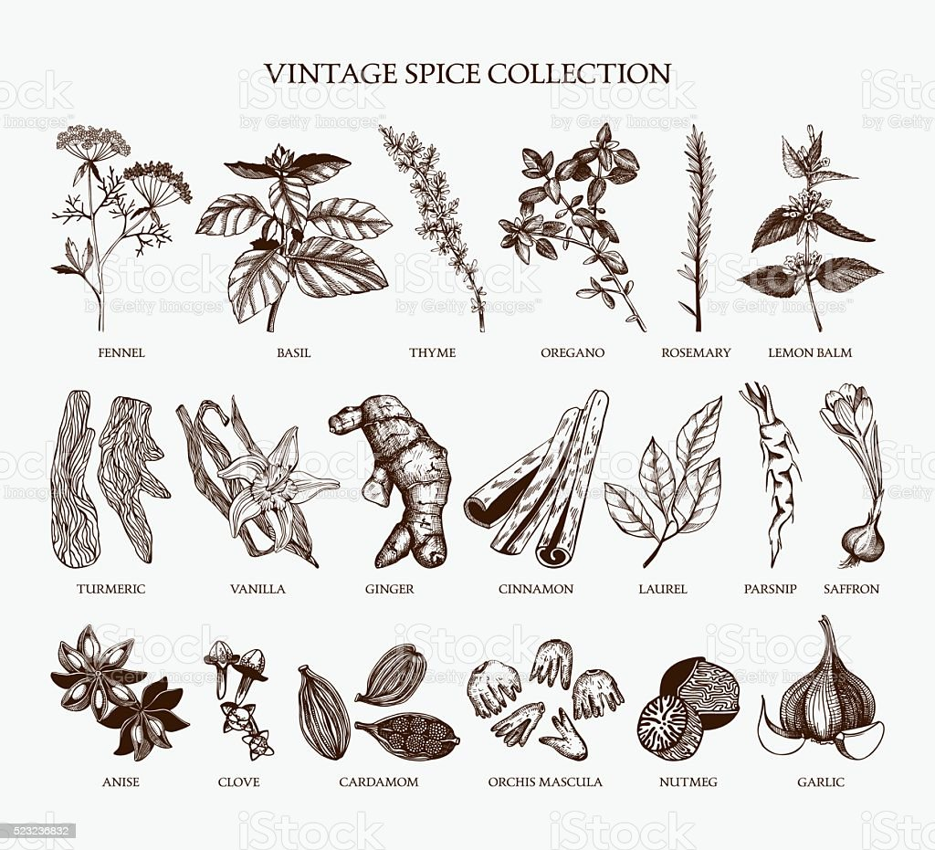 Vintage spice collection for your menu or kitchen design vector art illustration