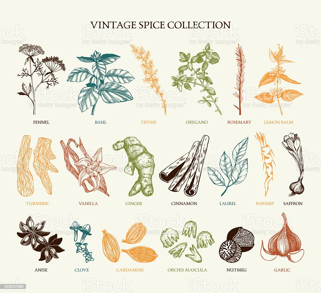 Vintage spice collection for your menu or kitchen design vector art illustration