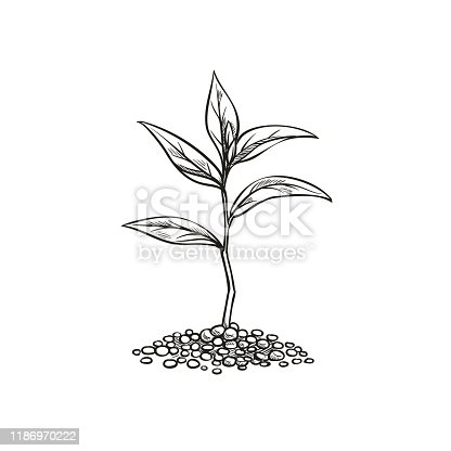 istock Vintage sprout in sketch style. 1186970222