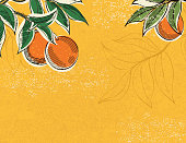 1950s and 60s style oranges poster. Hand drawn in sketchy cartoon style with lots of texture.