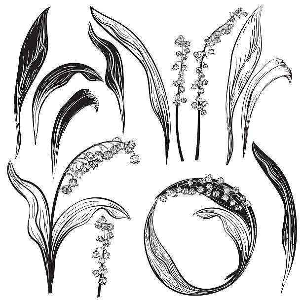 Royalty Free Lily Of The Valley Clip Art Vector Images