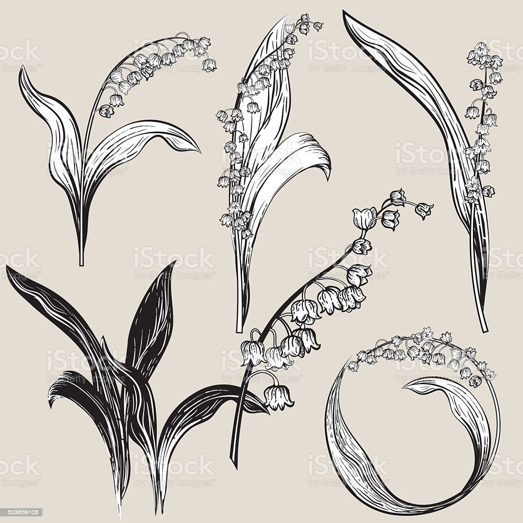 Vintage Style Botanical Lily Of The Valley Design Elements Stock