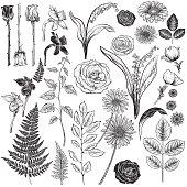 Vintage Style Botanical Roses Design Elements