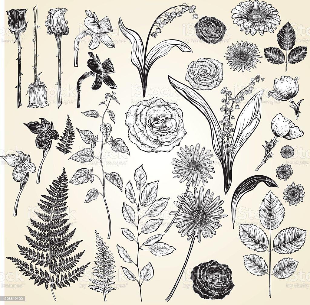 Vintage Style Botanical Roses Design Elements vector art illustration
