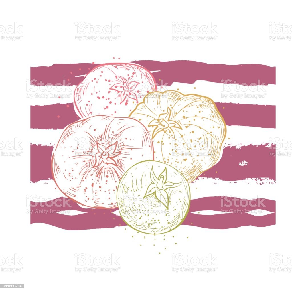 Vintage Style Hand Drawn Vegetable With Texture vector art illustration