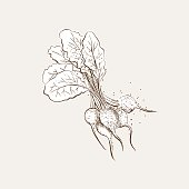 Vintage Style Hand Drawn Vegetable With Texture. Added stippling texture.