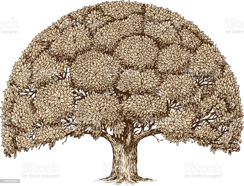 Vintage tree foliage. Hand drawn sketch old oak. Nature vector art illustration