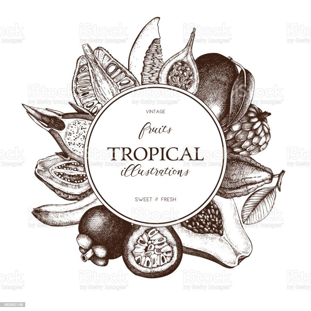 Vintage tropical fruits design vector art illustration
