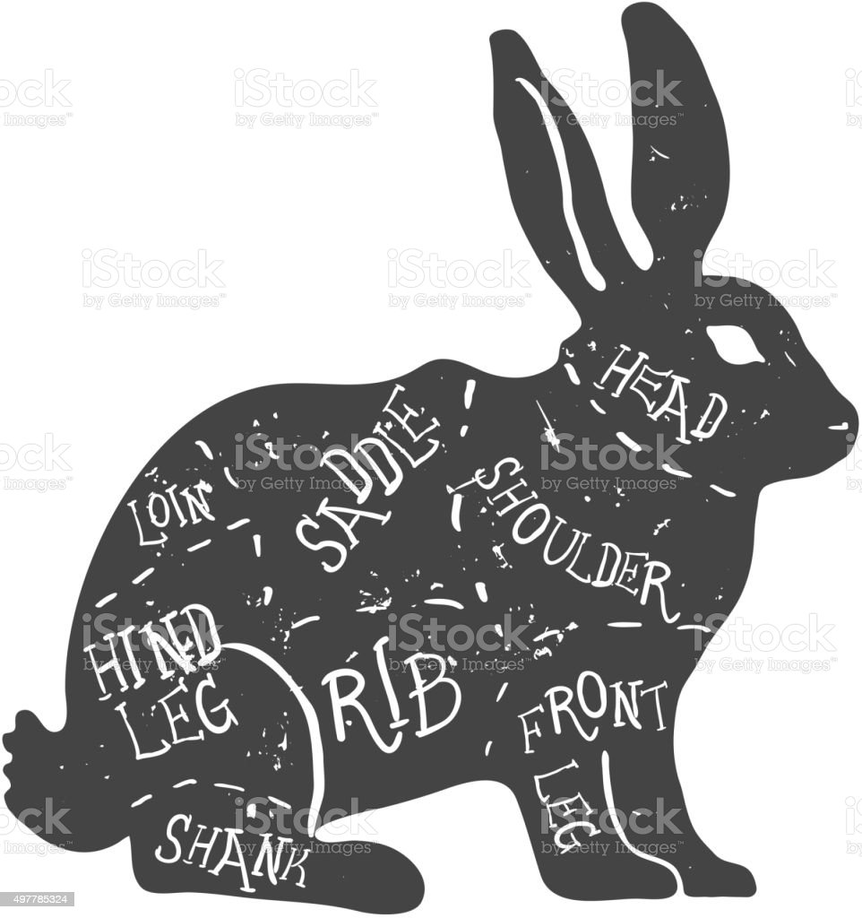 Ilustración de Vintage Tipográfico Conejo Cortes Diagrama De ...